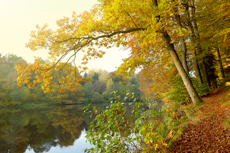 Evening sunlight at lake and autumn trees.