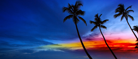 Palm trees and sunset on Caribean. Stock Photo