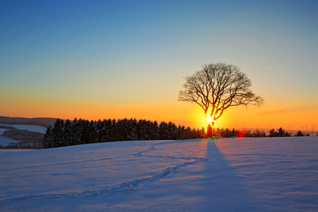 Winter sunset landscape with tree.