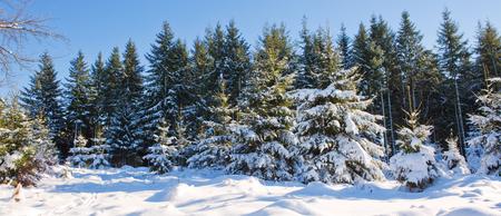 Abeti e neve, priorità bassa di festa. Archivio Fotografico - 85332338