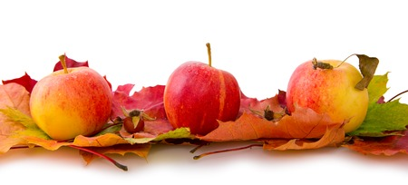 Autumn maple leaves and apples. Stock Photo