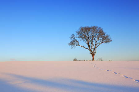 Winter landscape with tree. Stock Photo