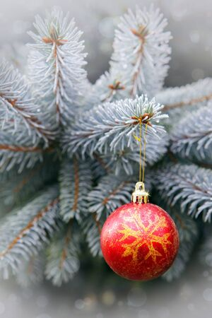 Christmas background with red ball and Pine branches isolated on gray bokeh background.Winter holiday background.