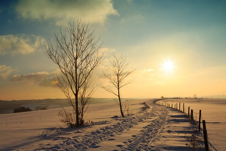 Winter sunset landscape with tree and road.