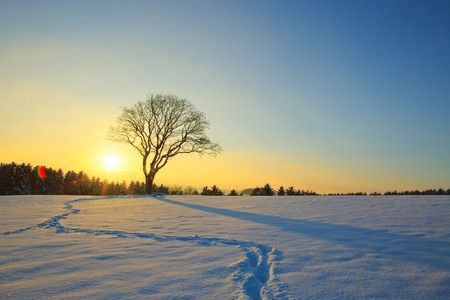 Winter sunset landscape with tree and footprints.