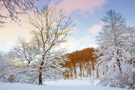 Beautiful winter landscape with snow covered trees .Winter background.