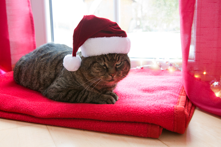 A gray cat with red Santa hat sits on a woolen blanket by the window in winter.