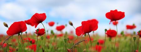 Poppies on sky background. Archivio Fotografico