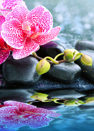 Beautiful pink orchid flowers with therapy stones. Spa background. 스톡 콘텐츠