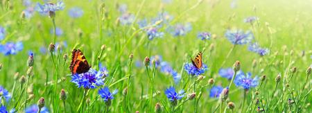 Macro-opname op twee vlinders en bloemen. Stockfoto