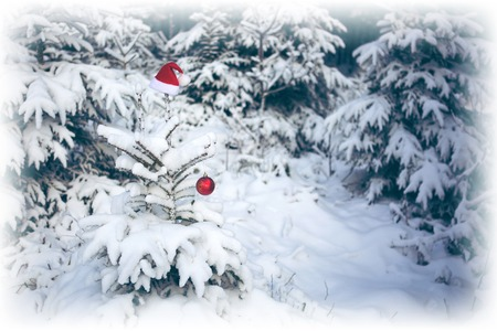 Red Santa Claus hat on the fir tree in winter forest. Christmas background. Standard-Bild