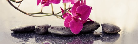Pink orchids flowers and spa stones . Spa background. Imagens