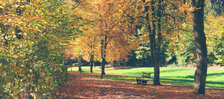 Bench in the park on a sunny day. Autumn landscape. Banco de Imagens