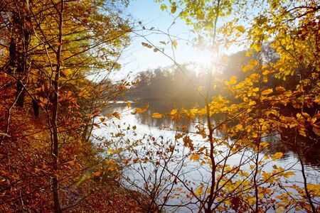 Colorful beech leaves on the sun and forest lake. Foto de archivo - 133570093