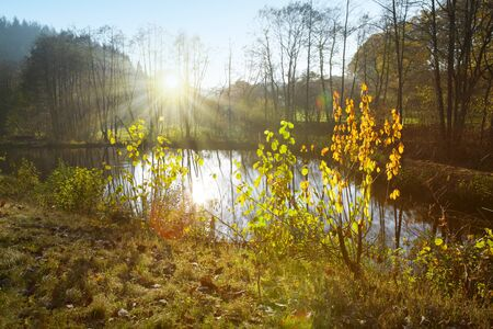 Colorful beech leaves on the sun and forest lake. Foto de archivo - 133570097