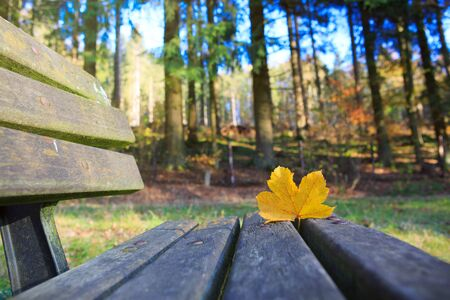 Yellow maple leaf on the wooden bench in the autumn park. Foto de archivo - 133570096