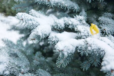 Snow-covered blue fir tree and leaf. Winter background with snow. Stock fotó - 133570109