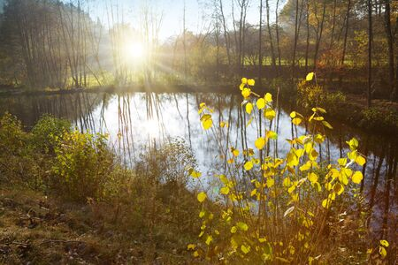 Colorful beech leaves on the sun and forest lake. Foto de archivo - 133570179
