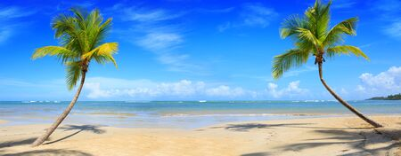 Palm trees and tropical beach on Caribbean sea as background. Foto de archivo - 133570210