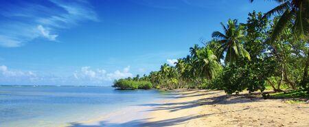 Palm trees on white tropical beach. Travel background. Foto de archivo - 133570206