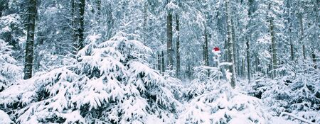 Red Santa Claus hat on the fir tree in winter forest. Christmas background. Stock fotó