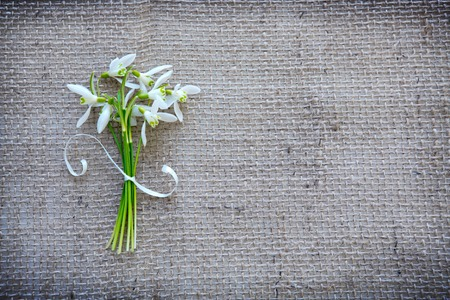 White snowdrops background. Festive decoration on cloth background.