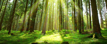 Sunlight in Germany Forest. Spring nature background.