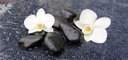 Two white orchid flowers and stone with water drops isolated on black background.