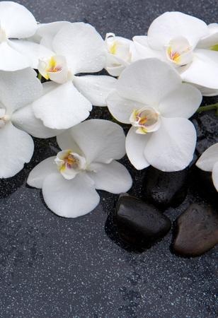 Nature morte avec pierres de spa et orchidée blanche.