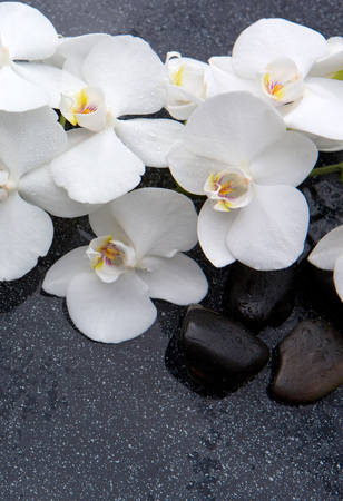 Still life with spa stones and white orchid. Archivio Fotografico