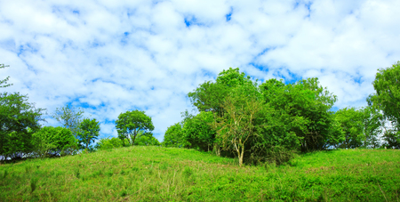 Tree on a green meadow and blue sky.Field,tree and blue sky.