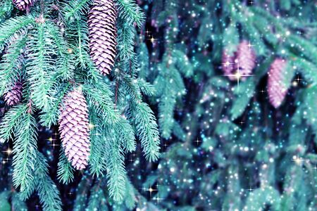 Background of Christmas tree branches with big fir cones and snowfall . 版權商用圖片