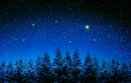 Christmas background with stars and trees in winter forest. Banco de Imagens