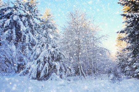 Snow covered trees and snowfall. Winter background.
