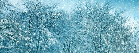 Winter Trees with snow .Christmas background.