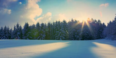 Beautiful winter landscape with snow covered fir trees and sunlight.