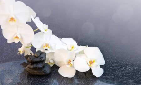 White orchids flowers and spa stones