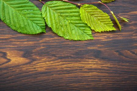 Green leaves over wooden table. Top view with copy space.