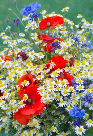 Wild flower bouquet with daisies and cornflowers.