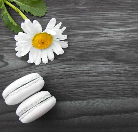 White marguerite on gray wooden background.Top view. Stockfoto