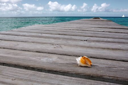 Seashell on wooden background and caribbean sea. Banque d'images
