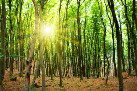 Sunshine in the summer forest with trees and grass. Stok Fotoğraf