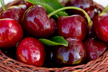 Close up of big red cherries with water drops.