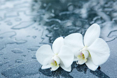 White orchid flowers with water drops isolated 版權商用圖片