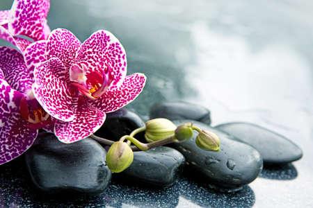 Spa concept with zen stones and pink orchid. Foto de archivo