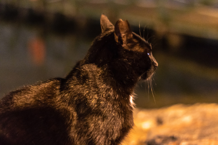 a black cute cat looking far away at coast. a orange colored night shoot.