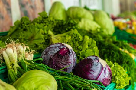a wide shoot to some lettuce and red cabbage - pastel colors on them. photo has taken at izmir/turkey.