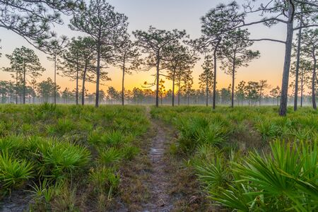 The Sunrise on a Central Florida Hike Stock Photo