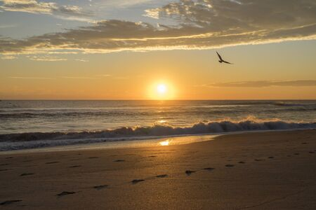 A bird flies through the early morning sunrise on Melbourne's beach Banque d'images