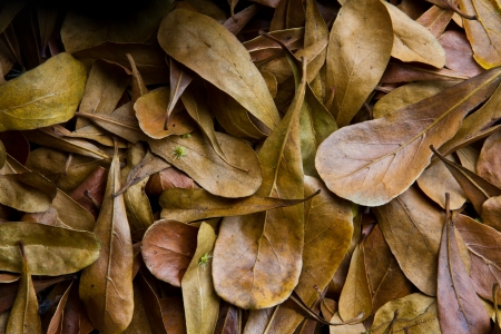 Dry leaves background   Deposition dry leaves a brown background color beautifully